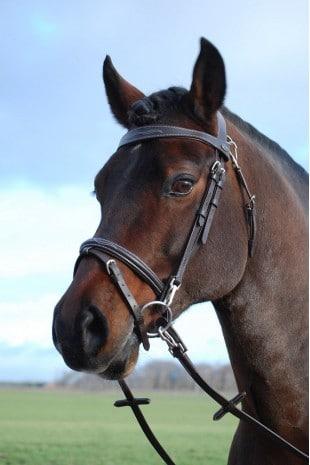 Rsruitersport - online paardenshop